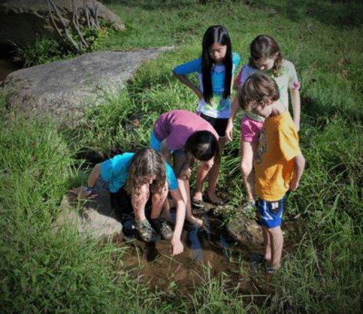 โครเซต, เวอร์จิเนีย: Exploring WIldrock's pristine stream
