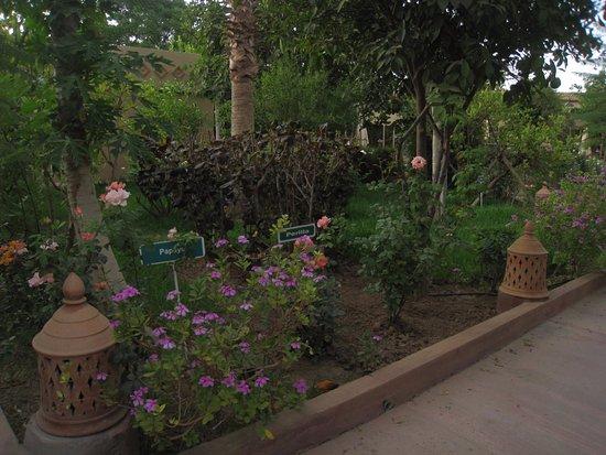 Hotel Dar Zitoune: The garden