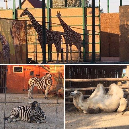 Зоопарк Сафари: photo0.jpg