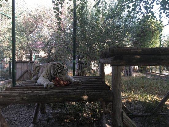 Зоопарк Сафари: photo2.jpg