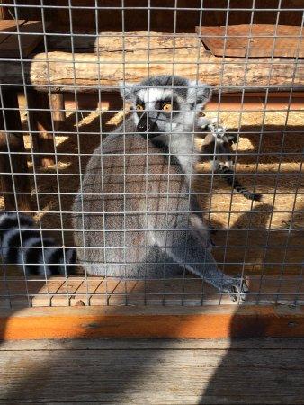 Зоопарк Сафари: photo4.jpg