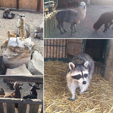 Зоопарк Сафари: photo5.jpg