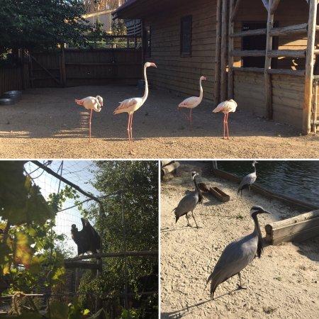 Зоопарк Сафари: photo6.jpg