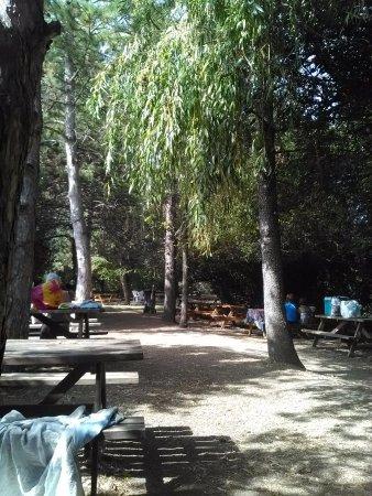 Marguerittes, Francja: le coin pic nic, a l'ombre, avec plein de tables, il y a de quoi faire