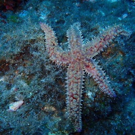 Mare Nostrum Diving Ustica : IMG_20170812_195243_426_large.jpg