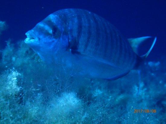 Mare Nostrum Diving Ustica : OI000079_large.jpg