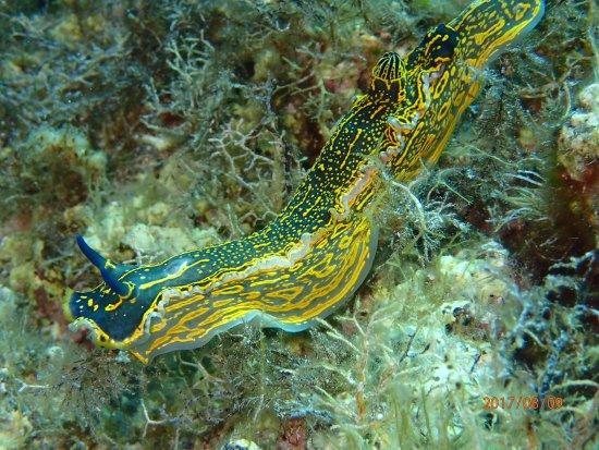 Mare Nostrum Diving Ustica : OI000149_large.jpg
