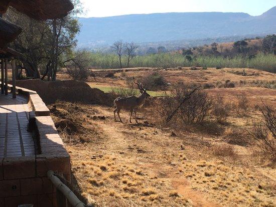 Hekpoort, Sudáfrica: photo0.jpg