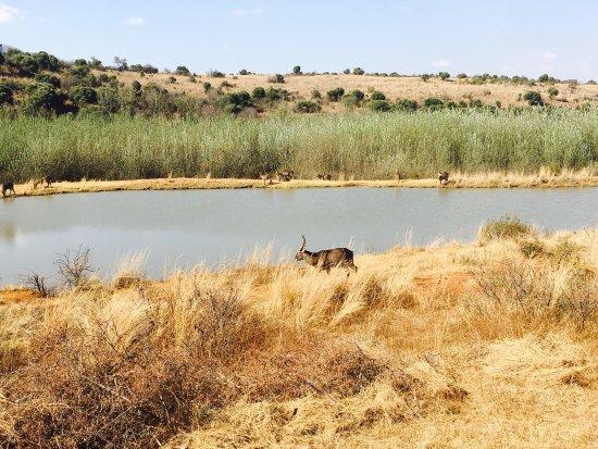 Hekpoort, Sudáfrica: photo1.jpg