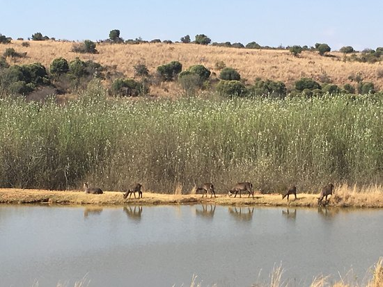 Hekpoort, Sudáfrica: photo2.jpg