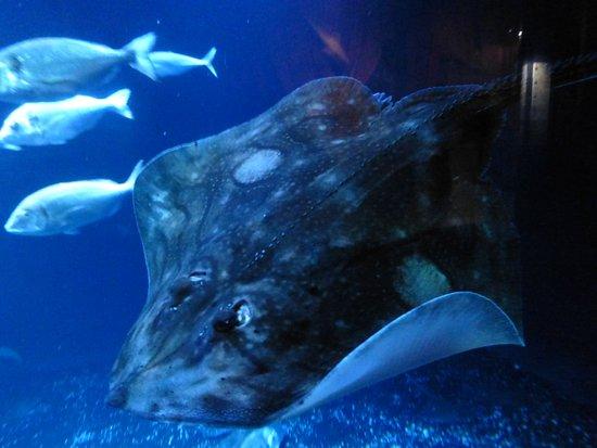 Aquarium de Paris - CineAqua: Algunas de sus exhibiciones