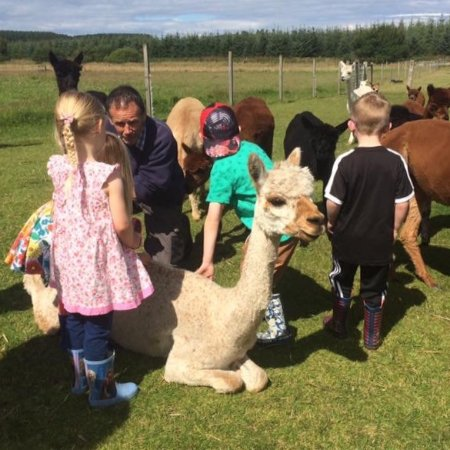 Alpaca Days Out