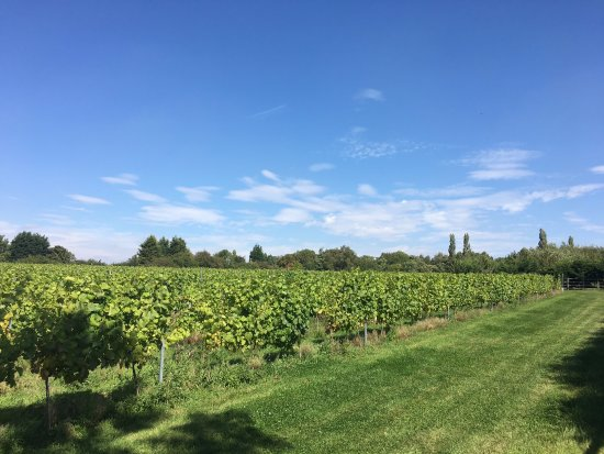 Hanwell Wine Estate