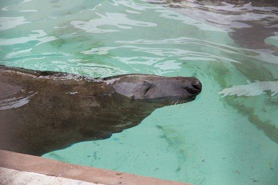 SEA LIFE Trust Cornish Seal Sanctuary: Seal