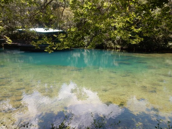 Homosassa Springs, FL: The water of the spring is turquoise blue when it emerges from the earth