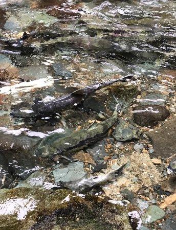 Gold Creek Salmon Bake: photo2.jpg