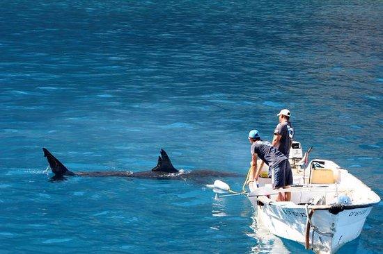 Horizon Charters Dive & Eco Adventures