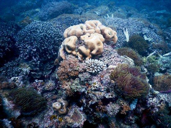 Makunduchi, Tanzania: Coral reef and marine life