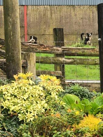 Tyddyn Mawr Farmhouse: photo0.jpg