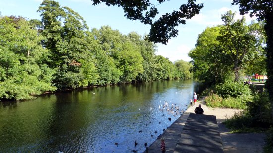 Ilkley, UK: Duck Feeding on the River Wharfe