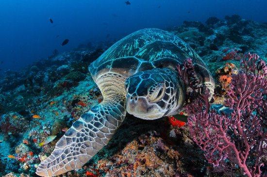 Maafushi Island: Arena Dive Club