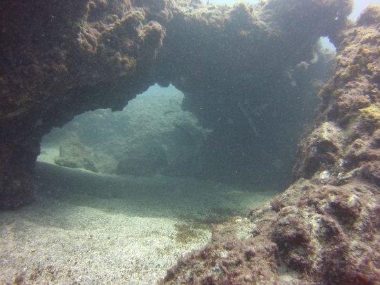 LJ Diving Tenerife: IMG_5198_large.jpg
