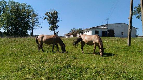 Stacja Badawcza Rolnictwa Ekologicznego i Hodowli Zwierząt