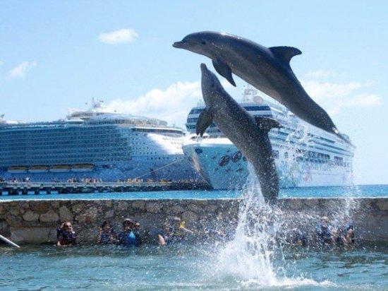 Mahahual, Mexico: Dolphin Discovery Costa Maya