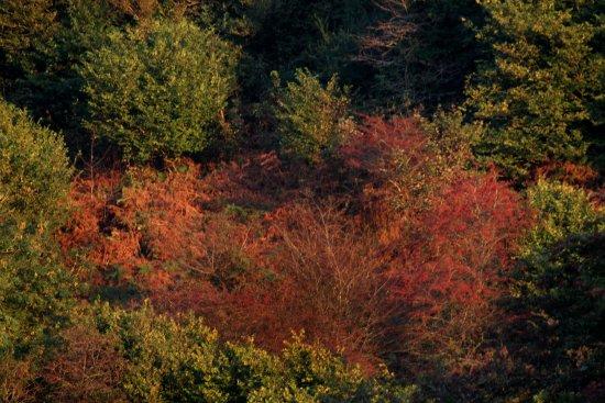 Llandissilio, UK: Our woodlands in Autum