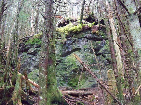 Burnsville, Carolina del Norte: Mossy Forest