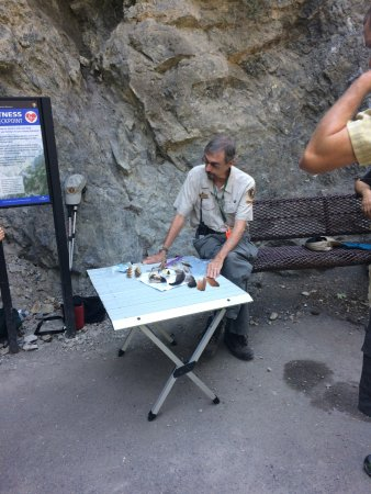 American Fork, UT: A Timp Cave volunteer shares information on the local red tailed hawks