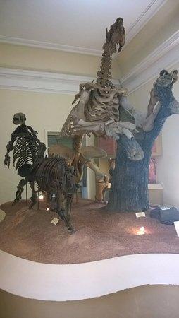 National Museum: Esqueleto de uma preguiça gigante e outros animais pré-históricos