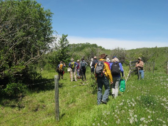 Turner Valley, Canada: A wild forage walk in June with Full Circle Adventures and the general public