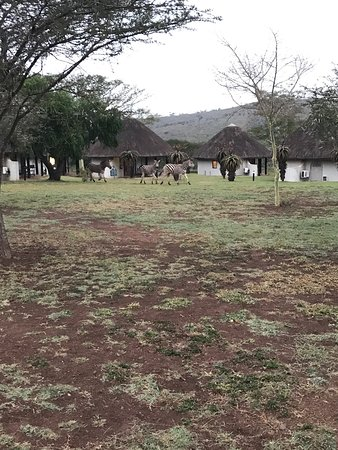 Zululand Safari Lodge: photo5.jpg