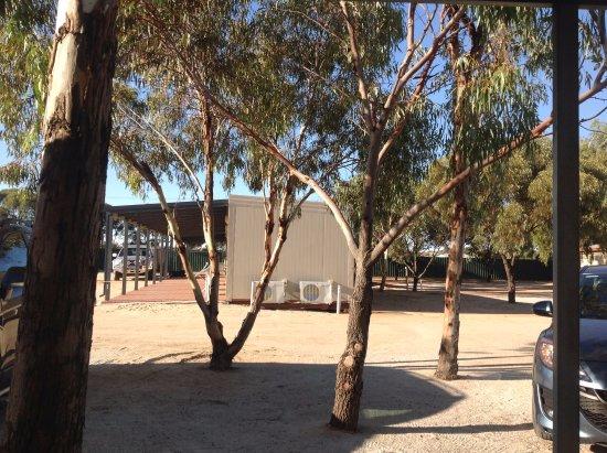 Merredin, Australia: Budget accommodation set amongst gum trees - view from door