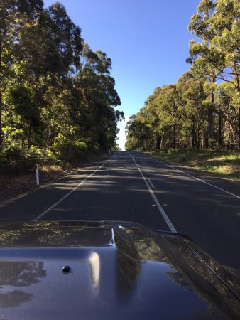 Blackwood Forest, Austrália: Driving in to Blackwood