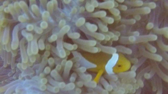 Blue Marlin Dive Gili Trawangan: photo5.jpg