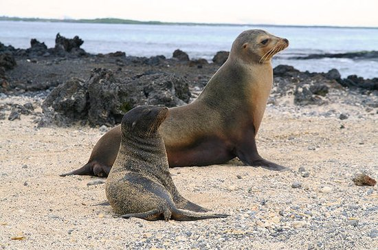 5-Day All-Inclusive Galapagos...