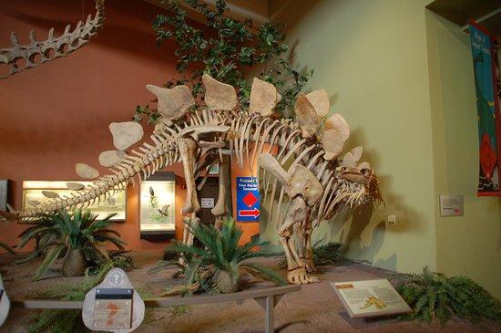 Natural History Museum Albuquerque Hours