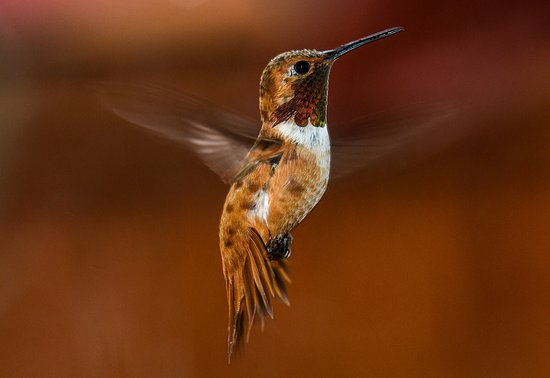 Grants, New Mexiko: Some incredible hummingbirds at Sheri's in summer. They were there at first light until darkness