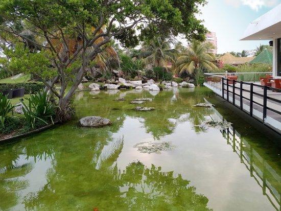 Foto de grand oasis cancun canc n cena rom ntica en la for Estanques para peces ornamentales