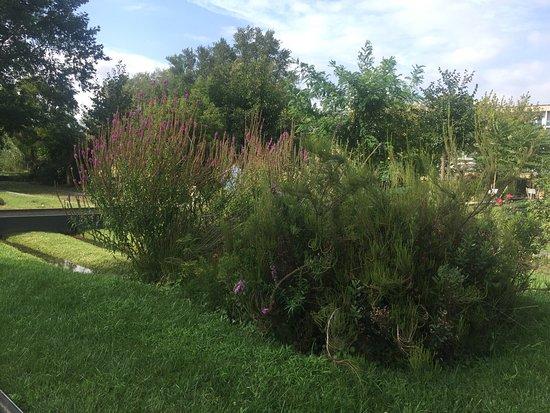 Jardin botanique de bordeaux bord us o que saber antes for Bordeaux jardin botanique