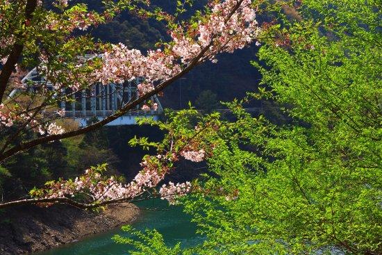 Mizukami-mura, اليابان: 市房ダムの桜・その1