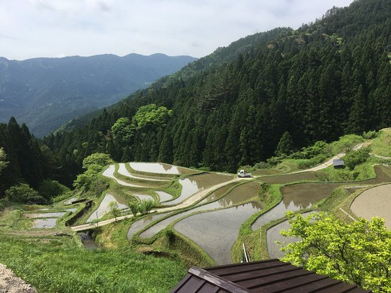 Kashihara Rice Terraces