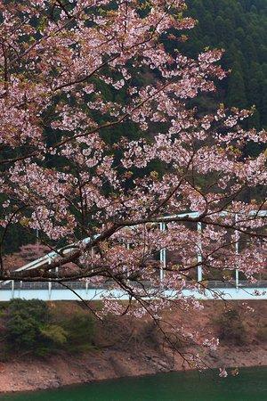 Mizukami-mura, اليابان: 市房ダムの桜・その3