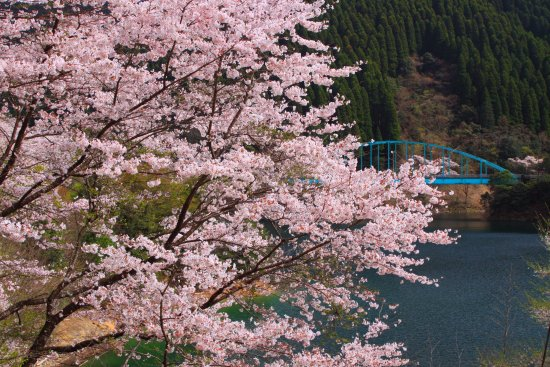 Mizukami-mura, Japan: 市房ダムの桜・その4