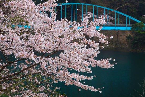 Mizukami-mura, اليابان: 市房ダムの桜。その5