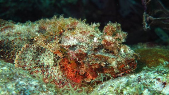 Dressel Divers Bayahibe : plongée