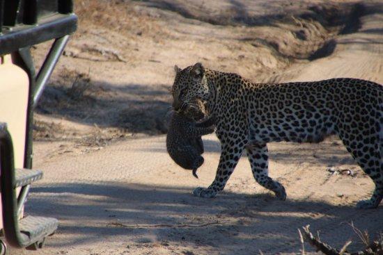 Ulusaba Private Game Reserve Resmi