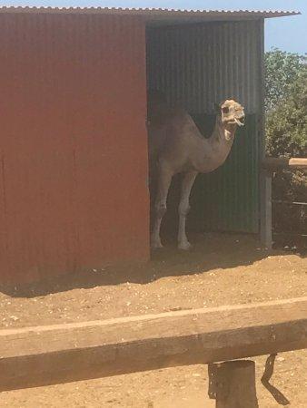 Pafos Zoo: photo6.jpg
